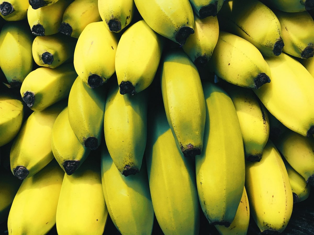Pianta Di Banana Foto tropicana fruit & veggie club: la banana - di roberto mirandola